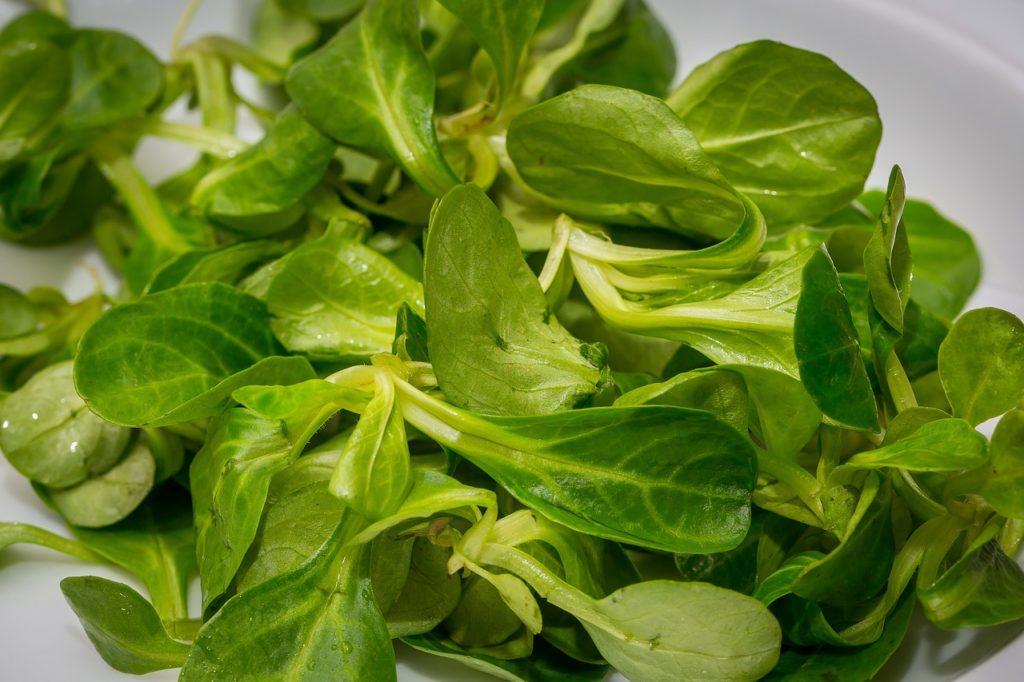 So machen Sie Feldsalat haltbar - Wissenswertes über Feldsalat